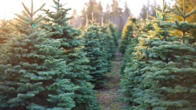 Christmas tree prices surge this holiday season