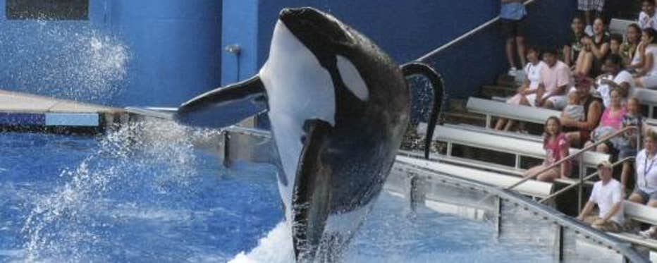 FBN's Liz MacDonald on the SeaWorld controversy over worker and whale treatment.