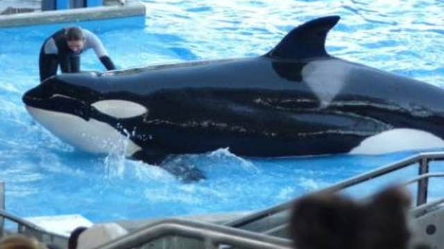 FBN's Liz MacDonald on SeaWorld's aggressive damage control measures in the wake of the documentary revealing 'aggressive' whale behavior.