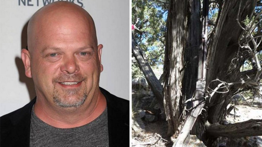 Rick Harrison takes a look at how much a  Winchester rifle found against tree in Nevada national park is worth