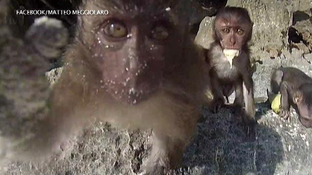 Cheeky monkey grabs tourist's GoPro