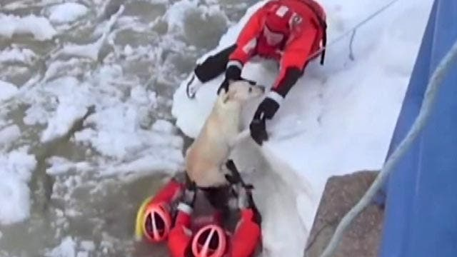 Coast Guard pulls lucky pup from icy waters