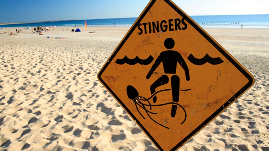 Q&A with Dr. Manny: I am planning a beach vacation this summer and I am worried about jellyfish stings. What is the best course of action if I or one of my kids are stung?