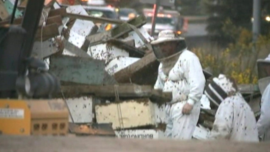 Raw video: Workers attempt to round up honeybees after truck carrying bee crates crashes in Washington