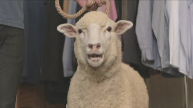 'Sheep to closet' model pays off for online retailer