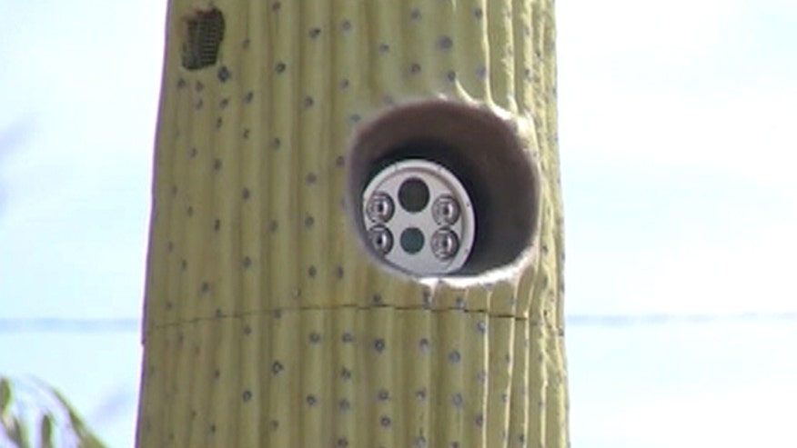 Upscale Arizona town putting license plate readers in cacti