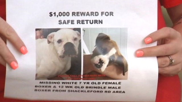 Rash of missing pets baffles authorities in rural Georgia