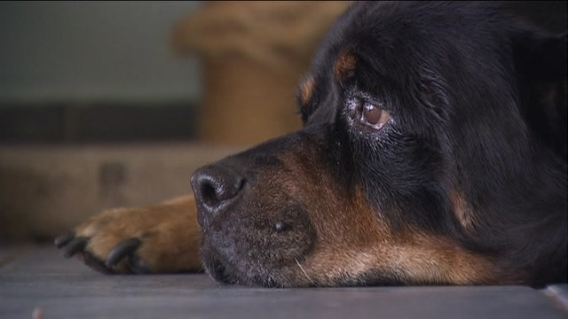 Florida man reunited with dog missing for almost a decade
