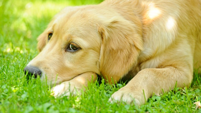 Can pets suffer from seasonal allergies?