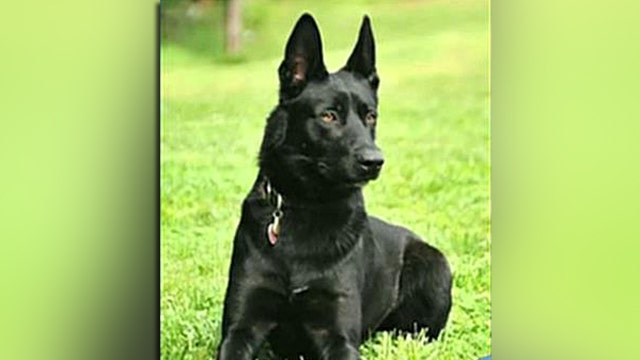 Hero K-9 leaps to rescue after deputy ambushed
