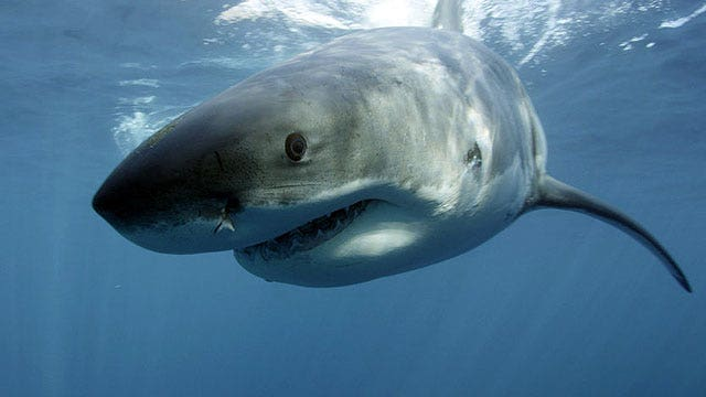 How concerned should beach-goers be about shark attacks?