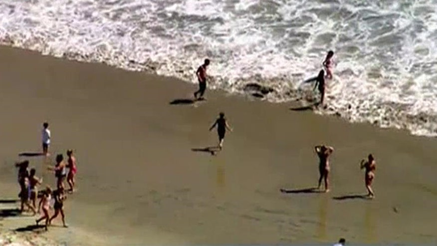 Beach evacuated after surfer claims a five to eight foot long shark bumped his surfboard