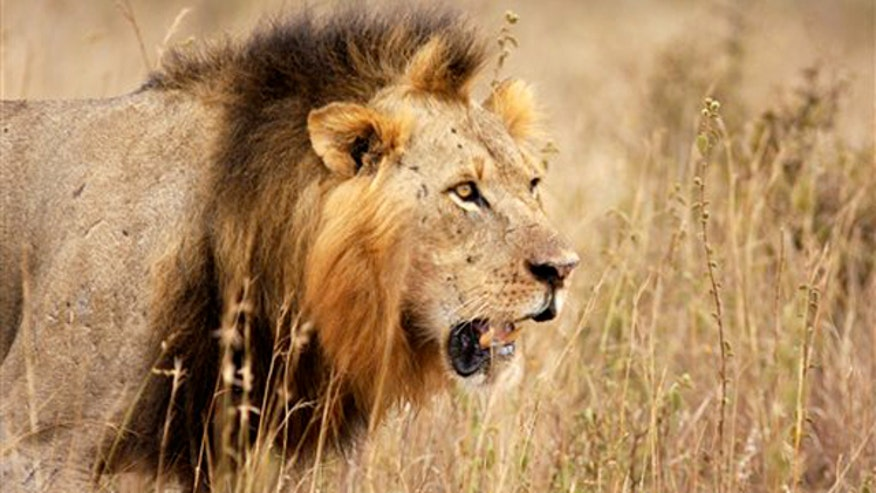 Fallout from the killing of Cecil the lion