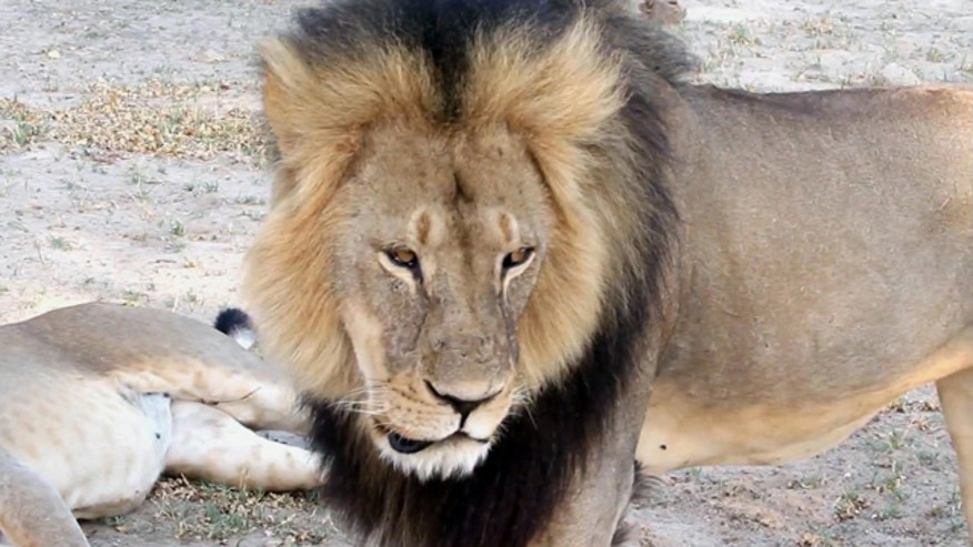 Officials say Pennsylvania doctor shot lion without permission