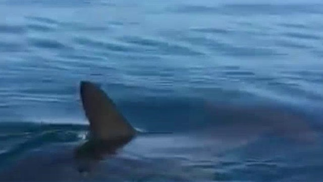 California beach closes after hammerhead shark sighting