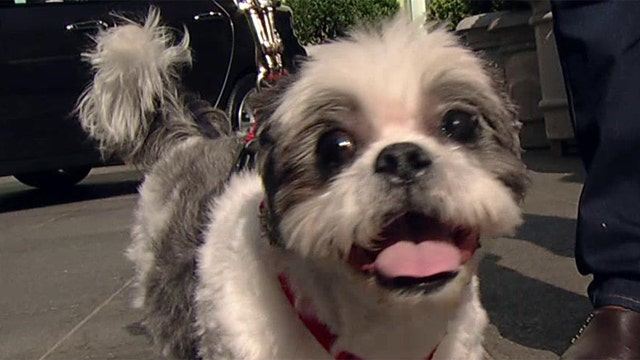 Simple steps to save your pet's life when disaster strikes