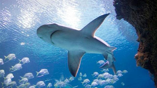 Shark sightings on the rise?