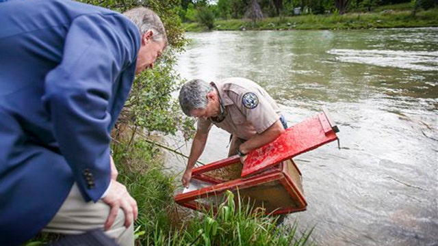 Colorado: Animas River water, some fish safe for consumption