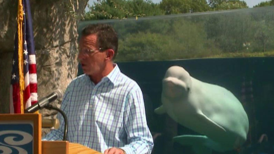 Connecticut governor gets photobombed at Mystic Aquarium