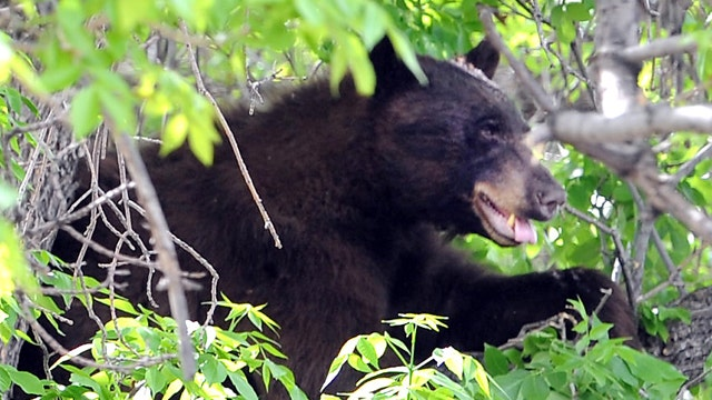 Boulder increases bear-resistant trash can enforcement