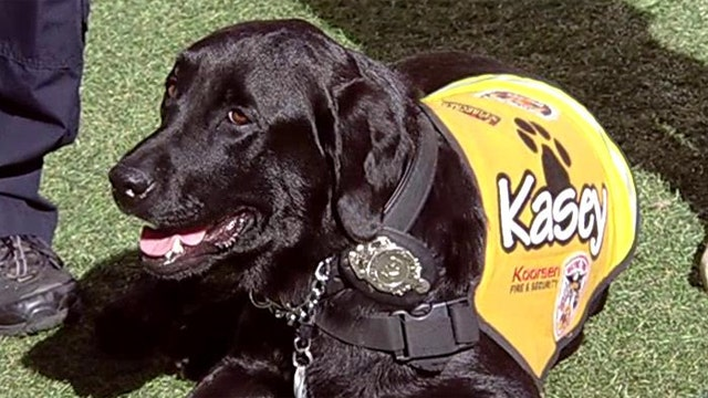 Kasey the Dog teaches kids about fire safety