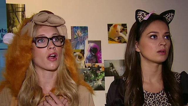'The Greg Gutfeld Show' tours Internet cat exhibit