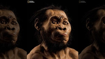 Fossils were found in cave in South Africa