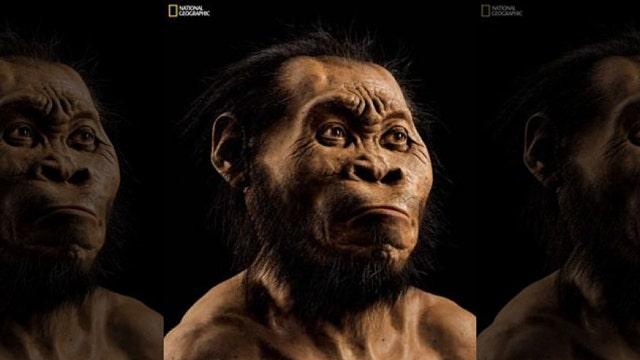 Scientists say they've discovered species related to humans