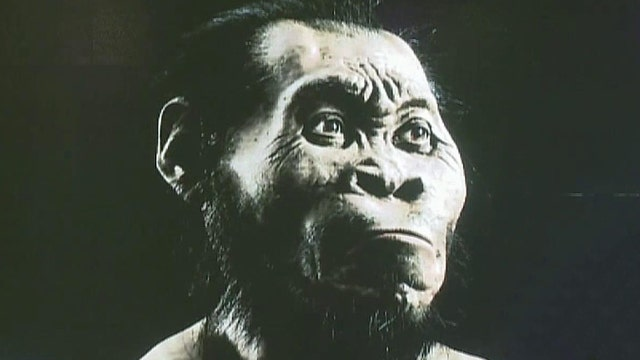 New species of human ancestor discovered in Africa