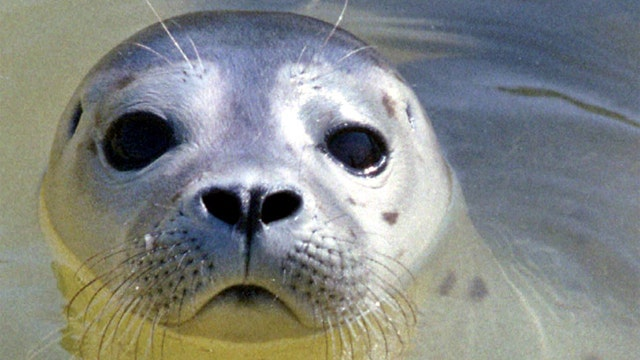 Animal attacks have swimmers on high alert in Oregon