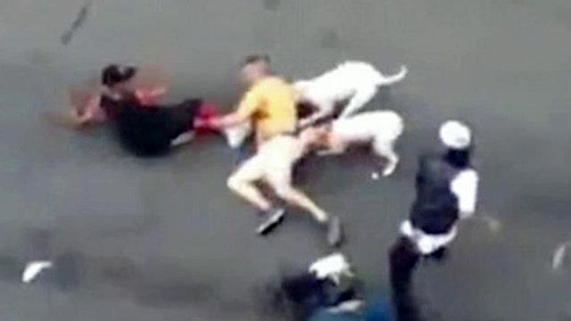 Pit bulls nearly maul man to death on New York City street