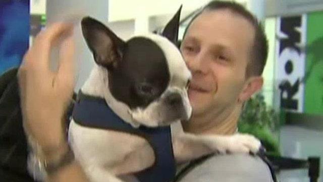 Pilot diverts flight to save dog's life