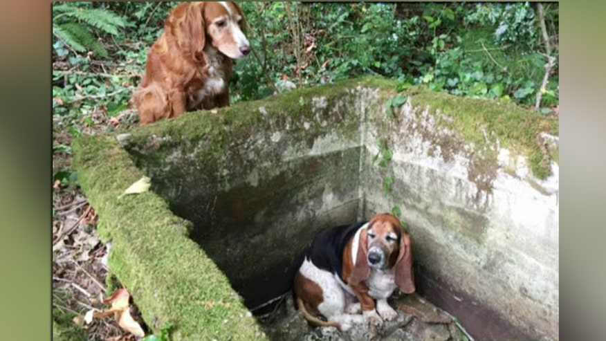 Two dogs refuse to leave each other's side as they wait for rescue