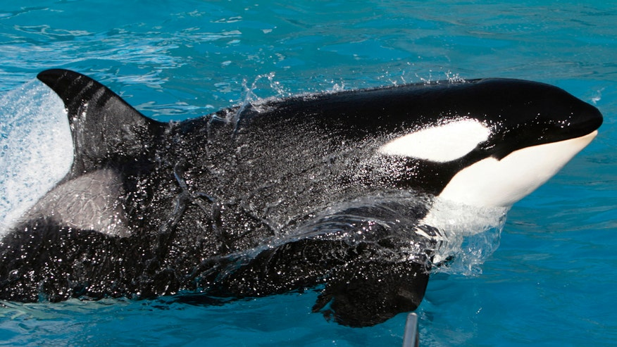Amusement park's signature killer whale show will be phased out