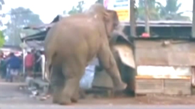 Rampaging elephant destroys nearly 100 homes in India