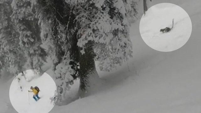 Snow leopard surprises skiers