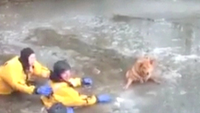 Heroes brave frigid water to save pup that fell through ice