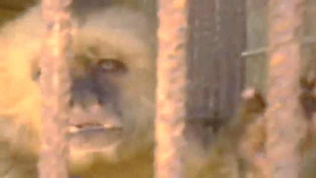#Greta3500: Van Susteren versus the monkey