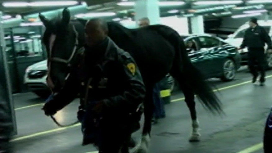 Horse bucked his mounted officer ran through Times Square during rush hour
