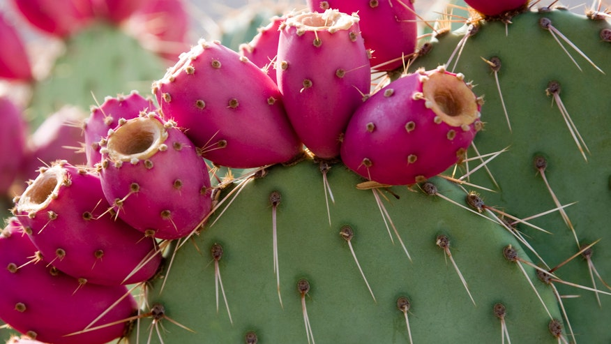 Q&A With Dr. Manny: I've been hearing a lot of buzz about cactus water. Some are saying it's even better for you than coconut water. Is this true or is it just a passing fad?