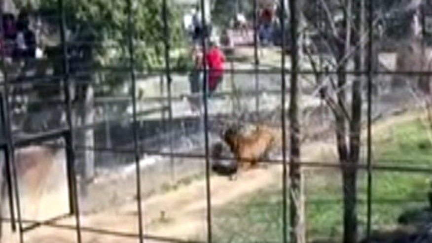 Warning, graphic content: Confrontation ensues at the Toronto Zoo