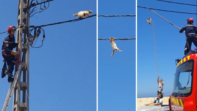 Cat tightropes on wire to avoid rescue, dangles, falls