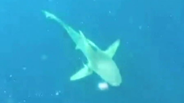 Scuba diver finds himself stranded at sea, circled by shark