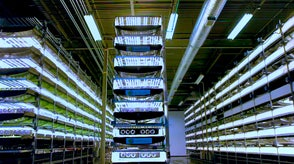Indoor vertical farming is transforming agriculture by controlling environments with technology to grow the perfect plant.