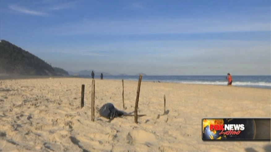 Body parts were found on Wednesday near the Olympic beach volleyball venue in Rio de Janeiro's Copacabana beach.