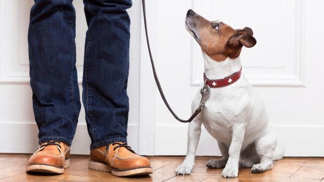 Zika-paralysis link, vaping heart risk, dogs do understand