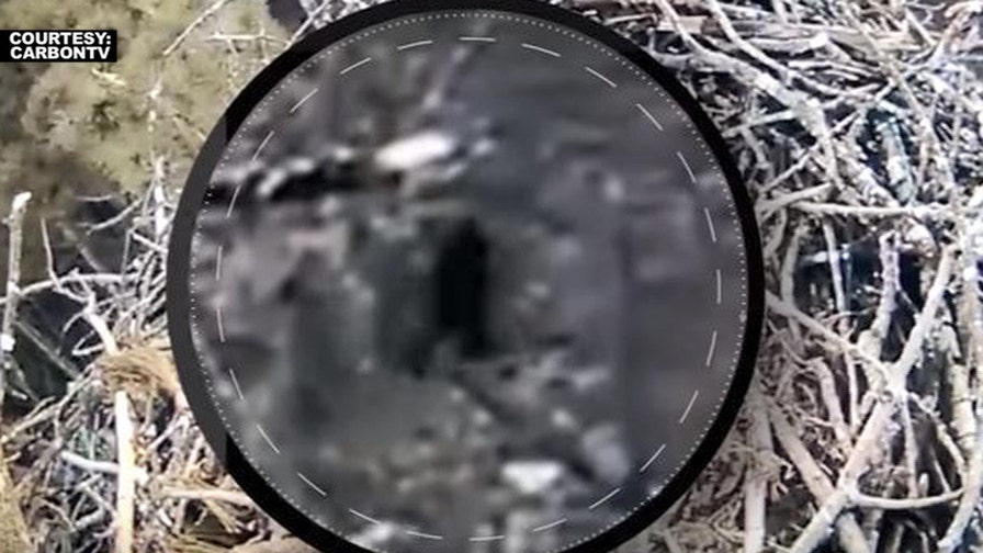 Purported Bigfoot sighting sparks new speculation after camera captures images of an unidentifiable creature walking through woods in Michigan