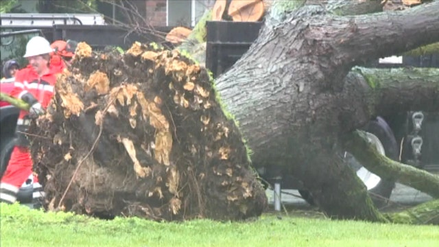 Massive fallen tree nearly flattens mini-van
