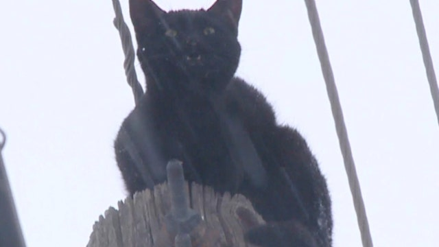 'Sparky' the cat rescued after two cold days atop power pole