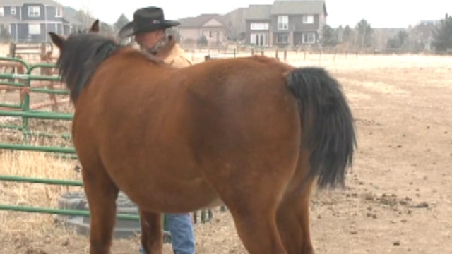 Owner 'sick in the stomach' after thieves hack horse tails